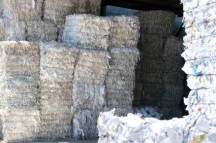Can You Put Shredded Paper in the Recycle Bin? | Shred Nations